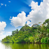Lake in jungle Royalty Free Stock Photos