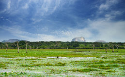 Lake in the jungle and dry tree Royalty Free Stock Photo