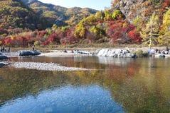 Lake. A lake in jungle, Jilin Province, China Royalty Free Stock Image