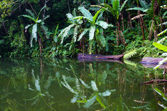 Lake in the jungle, Philippines Stock Image