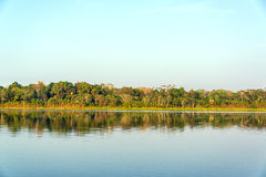 Lake and Jungle Reflection Royalty Free Stock Image