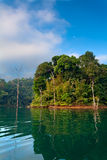 Lake in the jungle Royalty Free Stock Image