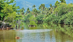 Lake in the jungles Royalty Free Stock Image