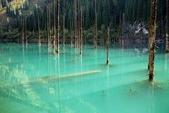 Lake Kaindy in the Kazakhstan. Dead trees in Lake Kaindy, Tien-Shan mountains, Kazakhstan, Central Asia Royalty Free Stock Image