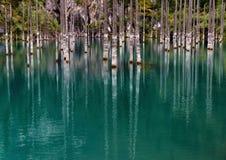 Lake Kaindy in the Kazakhstan. Dead trees in Lake Kaindy, Tien-Shan mountains, Kazakhstan, Central Asia Stock Image
