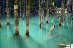 Lake Kaindy in the Kazakhstan. Dead trees in Lake Kaindy, Tien-Shan mountains, Kazakhstan, Central Asia Royalty Free Stock Images