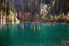 Lake Kaindy in Tyan-Shan mountains Stock Photos