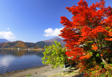 Lake kawaguchi in autumn season. At japan royalty free stock photography
