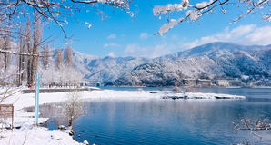 Lake Kawaguchiko , Japan. Blue lake and many trees and big mountains in snowy Stock Image