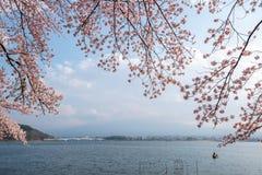 Lake kawaguchiko and Mount fuji with cherry blossom. In Yamanashi near Tokyo, Japan stock photography