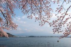 Lake kawaguchiko and Mount fuji with cherry blossom. In Yamanashi near Tokyo, Japan stock photo