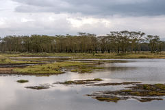 Lake of kenia Royalty Free Stock Image