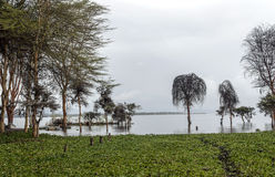 Lake of kenia Royalty Free Stock Images