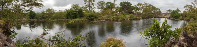 Landscape of Kenya, Mzima Springs with a lot of plant Royalty Free Stock Photo