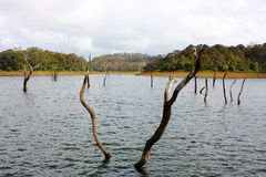 Lake in Kerala Royalty Free Stock Photo