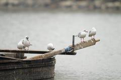 Lake Kerkini birds Royalty Free Stock Image