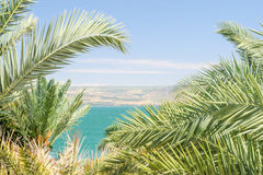 Lake Kinneret or Sea of Galilee in the frame of palm fronds Royalty Free Stock Images