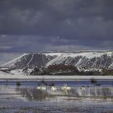 Lake Kleifarvatn at Reykjanes peninsula in Iceland royalty free stock image