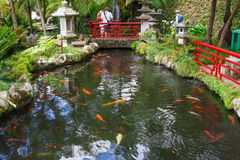 Lake with Koi fish in Tropical Garden Monte Palace, Madeira, Portugal Royalty Free Stock Images