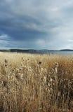 Lake landscape. Before summer storm Royalty Free Stock Photo