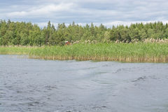 Lake landscape. With boat wake and reeds, Varmland, Sweden Stock Photos