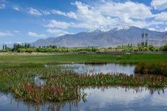 Lake landscape at high altitude. Beautiful Lake landscape at high altitude of Leh , Ladakh , India stock images