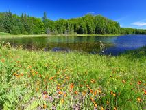 Wisconsin Lake Landscape. Lake landscape in the Northern Highland American Legion State Forest of Wisconsin royalty free stock photo
