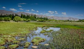 Lake landscape in summer. Lake landscape of Leh in summer stock photography