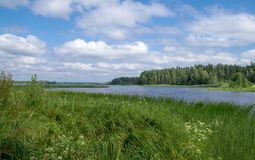 Lake landscape. Summer in Russia. stock photography