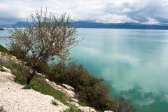 Lake landscape with tree. Royalty Free Stock Photo