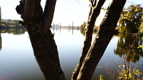 Lake landscape through a tree trunk. In october stock video footage