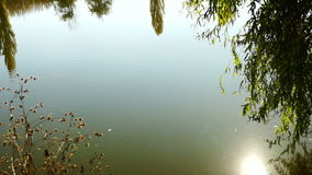 Lake landscape with willow, lens flare and trees mirrored in water. Lake landscape with willow, lens flare, trees mirrored in water and October sun stock video