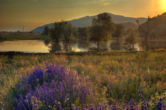 Lake with lavender - summer picture Royalty Free Stock Photo
