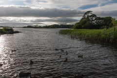 Lake Leane near Ross Castle Stock Photography