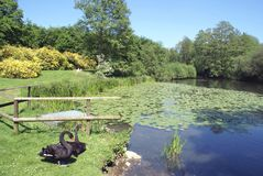 Lake in Leeds castle garden, England Royalty Free Stock Image