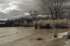 Lake leman Royalty Free Stock Photo