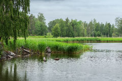 Lake during a light drizzle Stock Image