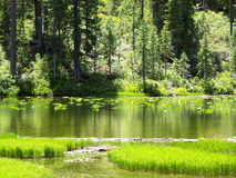 Lake with Lily Pads. Lake Eleanor with lily pads, Trinity Alps Wilderness Stock Photos