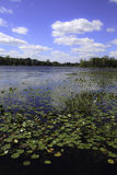 Lake with Lily Pads Royalty Free Stock Photos