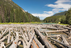 Lake littered with logs Stock Photos