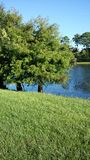 Lake. Local lake with beautiful trees all around it stock image