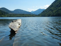 Lake and Log Stock Image