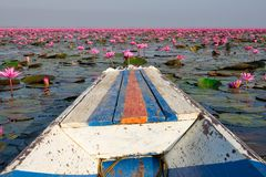 Lake With Lotos Flowers. Pond with pink blooming flowers Stock Photo