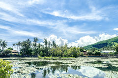 Lake of lotuses at west of tropical island Bali, Indonesia. stock photo
