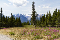 Lake Louise resort with wildflowers Stock Images