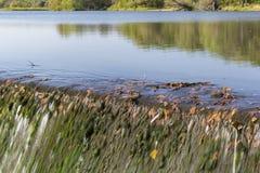 Lake Louise Dam Royalty Free Stock Images