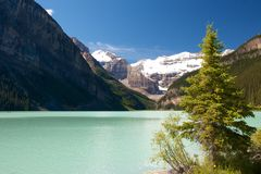 Lake Louise and Fir. Quiet Lake Louise with majestic Rocky Mountains in the background Stock Photo