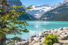 Lake Louise and Glacier Stock Image