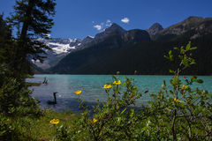 Lake Louise. Scenic lake louise picture with some yellow flowers in the foreground Stock Images