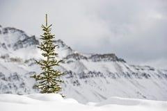 Lake Louise ski resort. Mountain Royalty Free Stock Photo